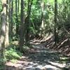 【日本遺産】箱根八里を一里くらい歩いてきた(2)甘酒茶屋から船着き場