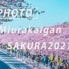 三浦海岸の桜:Sony α7c + SEL135F18GM、SEL70200GM