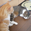 この夏、猫ベッドは四角が主流?