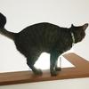 猫の理想体型
