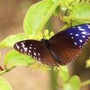 butterflyer's blog
