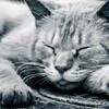 睡眠不足でメンタルが病むのは、嫌な記憶を思い出しやすいからかも
