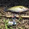 釣れない釣りは訓練された釣りだ