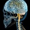 【水素セラピスト検定】ヘルスケア編 『神経系と脳の働き Part.8』