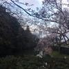 【お花見】金沢城と高岡城。桜を見るならどちらがいいのか?