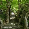 京都大原の里に寂光院を訪ね『平家物語』を聴く