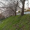 地元の桜 2021「ご近所 下見編」Ⅱ