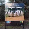 世界一小さいペンギンパレード見学(2018オーストラリア#9)
