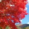 紅葉にいやされる季節です。 日常