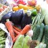 野菜到着。