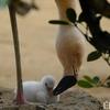 姫路市立動物園にて赤ちゃん誕生
