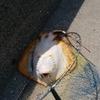 まるの釣りブログ