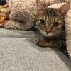 【猫画像】キジトラ猫が眠るまでの一部始終を書いていく