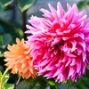 フラワードームにダリアにマンサクに!3月の「茨城県フラワーパーク」は河津桜と菜の花以外も見どころがいっぱい!!