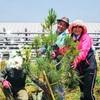 去年お話2018.06.03高田松原に植樹した松に名前つけさせてもらいました、