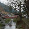 天川村の洞川温泉の龍泉寺で散る桜を見る