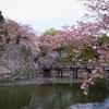 【写真】最近の写真撮影(2018/4/7)彦根城その2