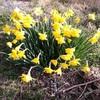 春になったので