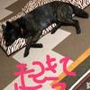 忠犬サン、ネェネの帰りを待つ!の巻〜今夜コソネェネノコト待ッテルョ(_ _).。o○