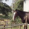 馬(長寿)