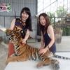 女子旅に人気のプーケットインスタ映え動物園