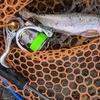 真っ昼間に旭川市忠別川に魚釣り、JACKALLの新しいロッドに入魂!