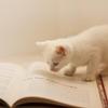 海外文学のススメ。『何度でも、おかえりを言おう』は海外文学初心者でも読みやすい!