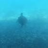 宮古旅行 南西楽園リゾート 半潜水式水中観光船「シースカイ博愛」に乗船。ウミガメとも出会えました!