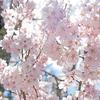 【LENDEX(レンデックス)】春のキャッシュバックキャンペーン&不動産担保付きローンファンドに投資完了!