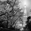 夜桜 エクスプロージョン