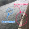 大阪城トライアスロン。世界初、城のお堀を泳ぐ大会!!応援者側の視点からレポートさせていただきます!!
