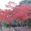 明石公園 へ紅葉を求めて朝ラン