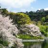 松山の桜とダイヤモンドクロス