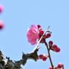 一輪咲いた梅の花