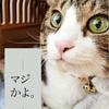 家族がいなくなるのは寂しい。猫の年齢と平均寿命を調べる。