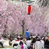 榴ヶ岡公園のお花見(2008年)