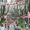 おおさわ桜まつり 4月6日(土)7日(日)開催!