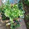 野菜の苗、花の苗、球根の買い物