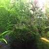水草ストック水槽トリミング