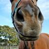 信じられない馬のショー動画3つ