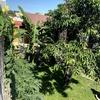 雨季の恵みを浴びた我が家の木々