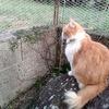 猫ちゃーの訪問者