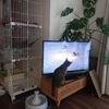 猫と暮らす家!狭いマンションの我が家で工夫していること