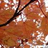 茶臼岳っていう那須岳に行って....ん?兎に角、紅葉🍁を求めて行ってきた。その1