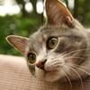 保護猫の預かりボランティアもどき日記その3