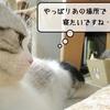猫の道具 ~すずめの嘆き~