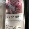 2018年11月28日(水)/丸善・丸の内本店/ヴァニラ画廊/アプリコ・アートギャラリー/他