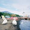 富士山とコブハクチョウ