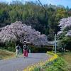 堀池のしだれ桜 2021.3.27