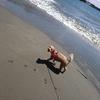 愛犬と旅するなら静岡へ行け!愛犬と遊ぶ伊豆日帰り旅行【レポ】